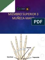 Muñeca-Mano Cat.2-3