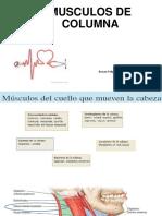 Miologia Columna 2019