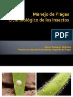 Ciclo Biológico de Los Insectos