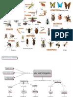 Presentacion de Invertebrados