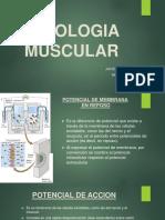 Ponencia Muscular