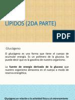Lipidos 2 y Ciclo de Krebs - Copia