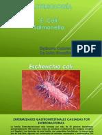 E coli 2