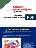 BIOL024 catalizadores