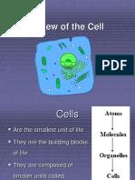 cells.nat