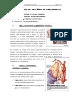 TEMA II. FISIOLOGÍA DE LAS GLÁNDULAS SUPRARRENALES