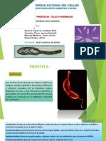 Prosteca Tallos y Pedunculo