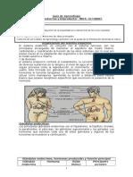 guia aprendizaje sistema endocrino 2018.doc