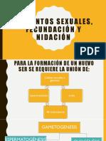 Elementos Sexuales, Fecundación y Nidación