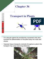 Transport in PLANTS