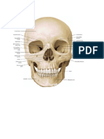 Musculoskeletal.docx