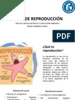 Tipos de Reproducción