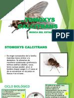 Stomoxys Calcitrans