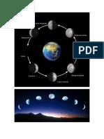 Las Fases de La Luna y El Reloj Biologico de Las Plantas
