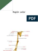 132260522-AXILA-2.pdf