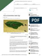 Kecoa Sembuhkan Sakit Gigi Oleh Riza Fitrianny - Kompasiana.com