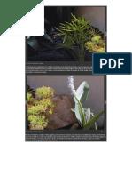 plantas para lagos.docx
