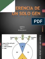 4-BG-herencia de Un Solo Gen2