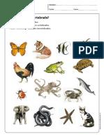 invertebrados.pdf