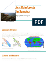 tropical rainforests in sumatra