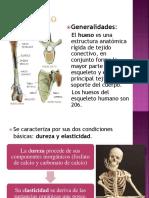 Generalidades Del Esqueleto Humano