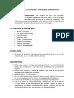 Trombidium holosericeum