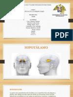 El Hipotálamo