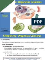 Organelas Citoplasmática