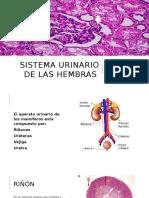 Sistema Urinario de Las Hembras-1