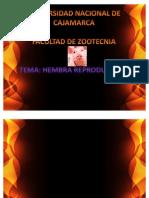 Hembra Reproductora EXPO
