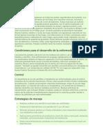 Bacteria tomate.pdf
