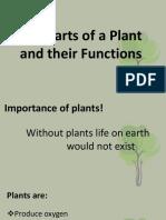 thepartsofaplantandtheirfunctions-131013195856-phpapp01