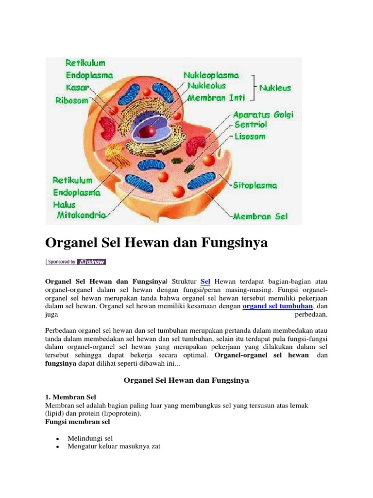 95 Gambar Organ Sel Hewan Dan Tumbuhan HD