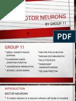 11Motor Neurons