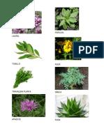 20 PLANTAS MEDICINALES.docx