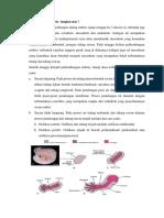 Pertumbuhan Embrio Tungkai Atas