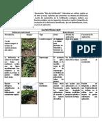 Plan de Fertilizacion Frijol Caupi