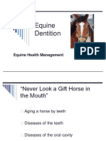 Horse Dentition