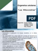 mitocondrias 2015