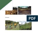 Deforestación y reforestacion.docx