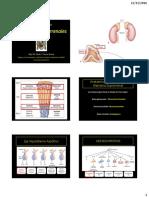 10- Fisiologia de Las Glandulas Suprarrenales Unmsm 2016