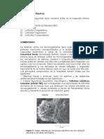 ciencias-biologia-03