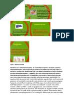 Factores de vurlencia.docx
