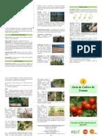 Triptico Cultivo de Tomate 1