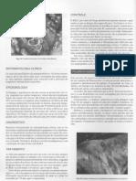 Veterinária06.pdf