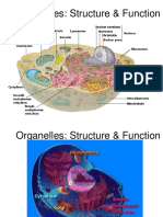 Organelles  structure function