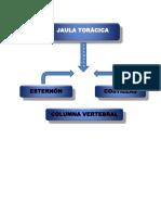Anatomia mapa conceptual