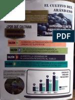 PROJAR - Folleto Arandanos