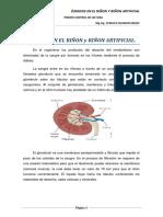 ÓSMOSIS EN EL RIÑON y RIÑON ARTIFICIAL.pdf