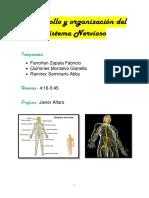 Desarrollo y Organización Del Sistema Nervioso